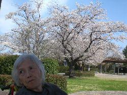 Sakura_013
